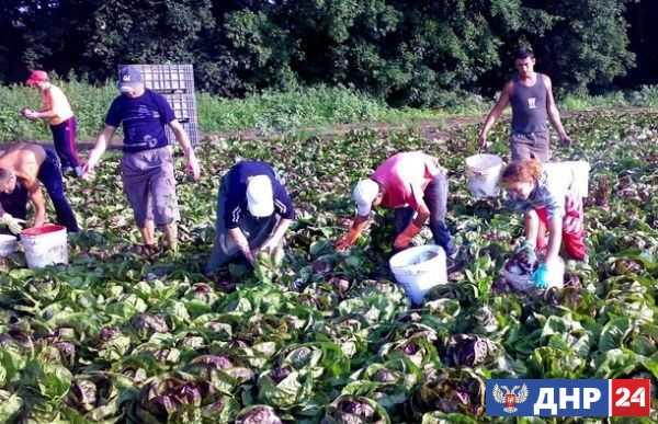 Украина кормится за счёт трудовых мигрантов, но приток денег из-за рубежа иссякает